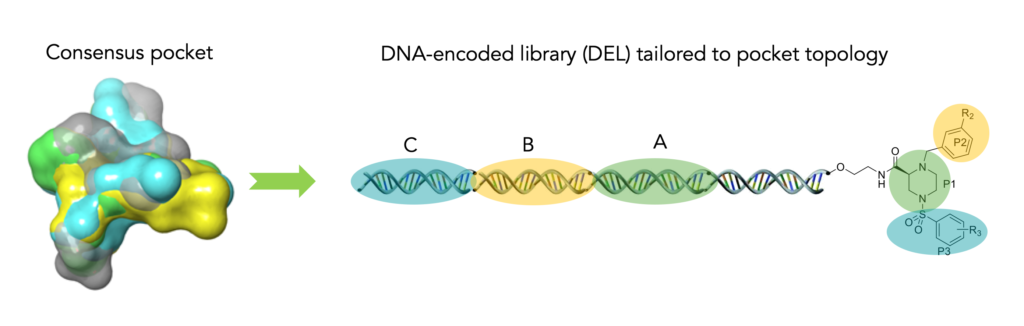 Figure 3: Consensus pockets provide a roadmap for computationally designed DNA-encoded libraries. Source: HotSpot Therapeutics